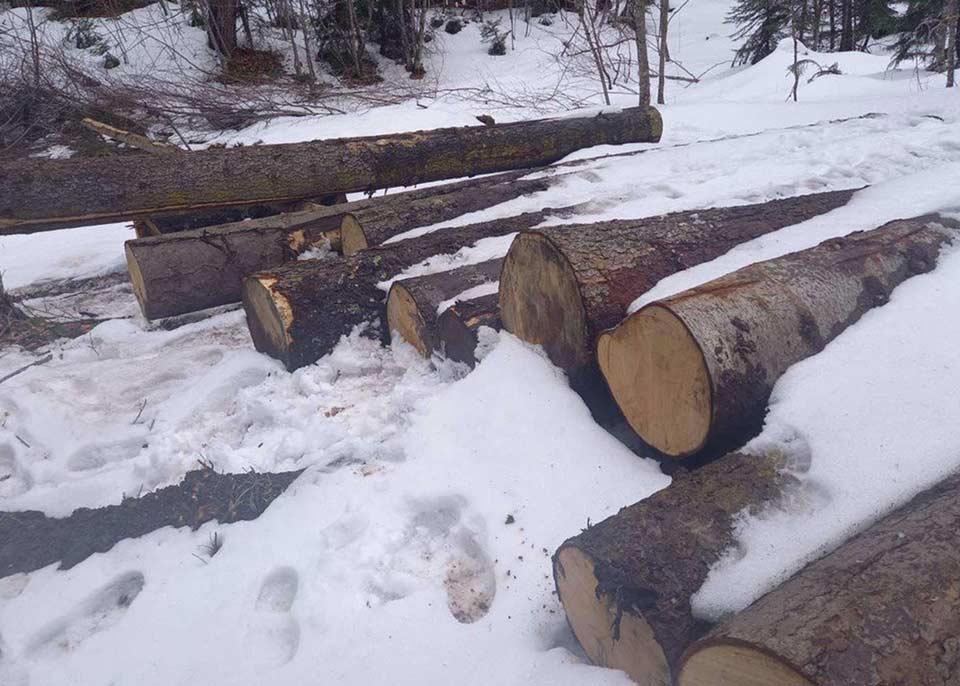 ახალციხესა და ბორჯომში ხე-ტყის უკანონო ჭრის ფაქტები გამოვლინდა
