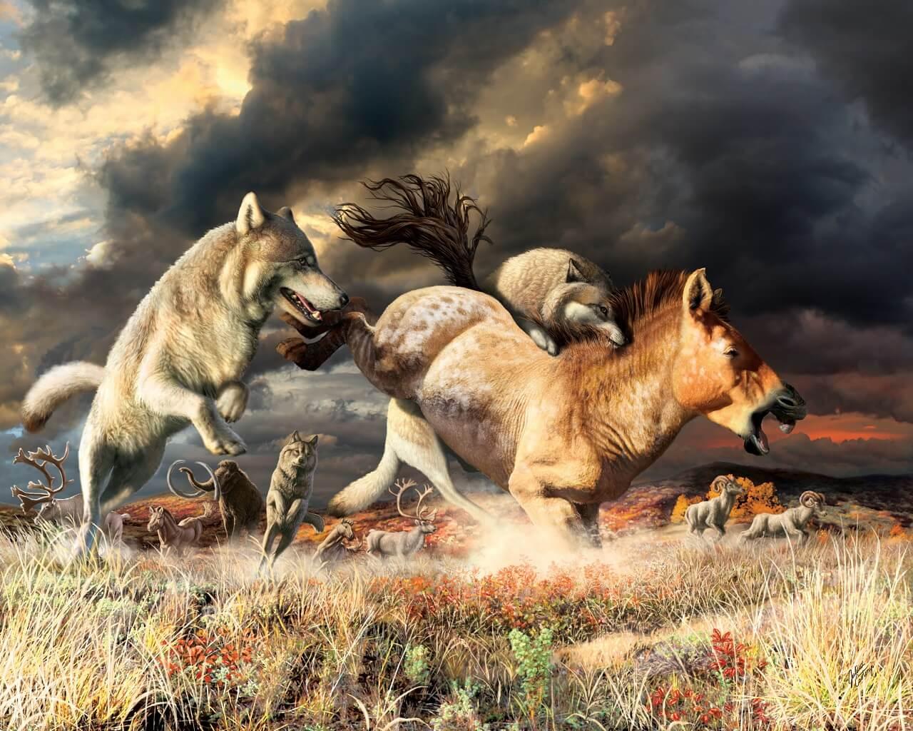 როგორ გადაურჩნენ მგლები ბოლო გამყინვარების ეპოქის მასობრივ გადაშენებას — ახალი კვლევა #1tvმეცნიერება