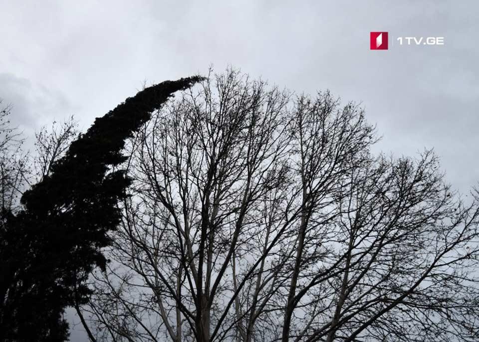 ლაგოდეხის მუნიციპალიტეტში ძლიერმა ქარმა საცხოვრებელი სახლები და სათბურები დააზიანა
