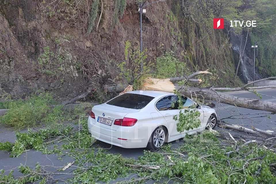 У моста Тамар Мепе на машину упало дерево