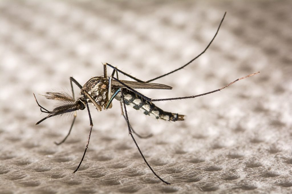 აშშ-ში გენმოდიფიცირებული კოღოები ბუნებაში პირველად გაუშვეს — #1tvმეცნიერება