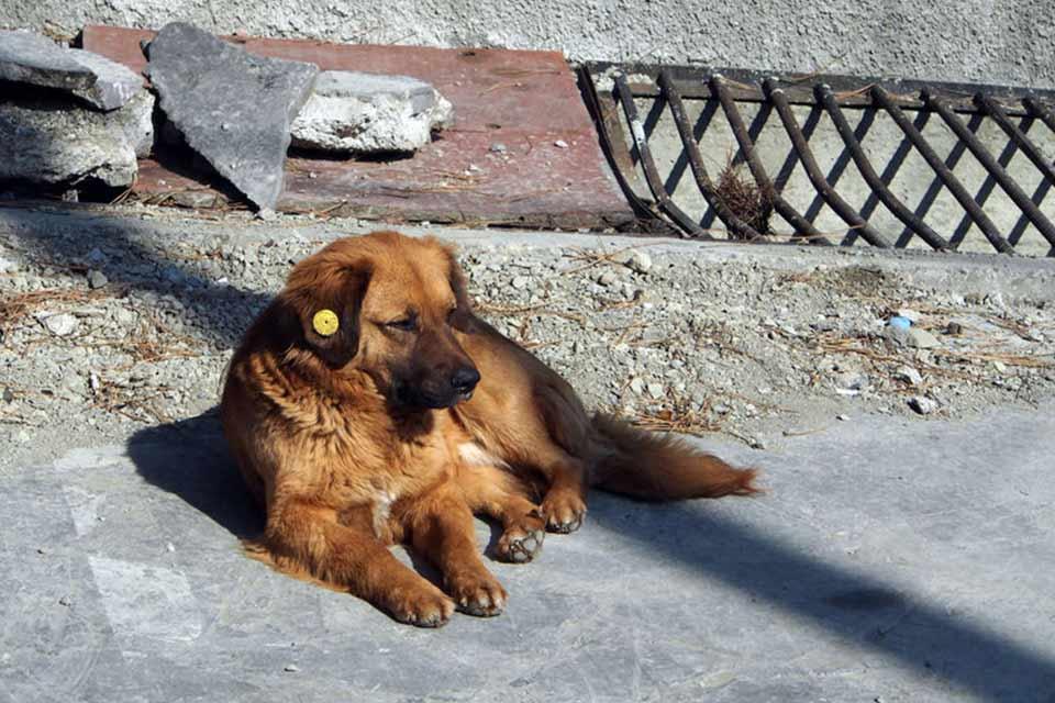 """პიკის საათი - ძვირფასო ადამიანო,მე """"საყურიანი""""ძაღლი ვარ!"""