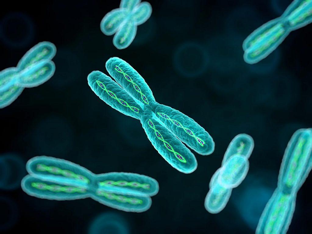 მეცნიერებმა ადამიანის ქრომოსომის მასა განსაზღვრეს — პირველად ისტორიაში #1tvმეცნიერება