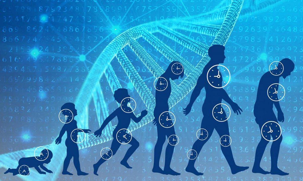 განსაზღვრავს თუ არა ადამიანის სიცოცხლის ხანგრძლივობას უმთავრესად გენეტიკა — ექსპერტთა პასუხი #1tvმეცნიერება