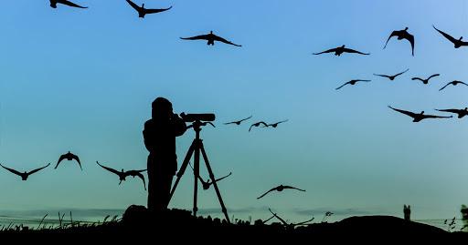 """#სახლისკენ - """"ფრინველებზე დაკვირვება"""" - ეკოტურიზმის ერთ-ერთი ეგზოტიკური ფორმა"""