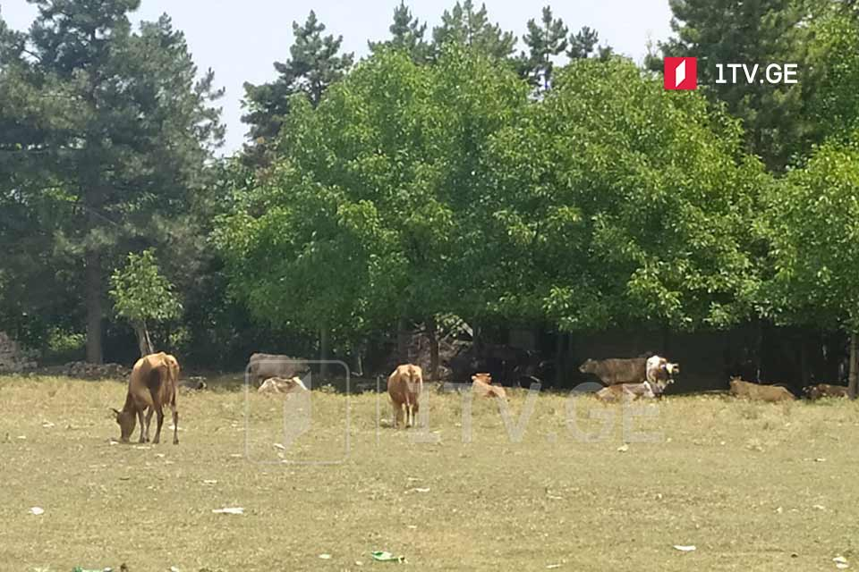რუსმა სამხედროებმა რამდენიმე საათის წინ ახალუბანთან ორი მწყემსი დააკავეს და ცოტა ხნის წინ გაათავისუფლეს