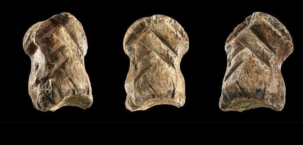 51 000 წლის წინანდელი მოჩუქურთმებული ძვალი სრულიად ცვლის წარმოდგენას ნეანდერტალების შესახებ — #1tvმეცნიერება