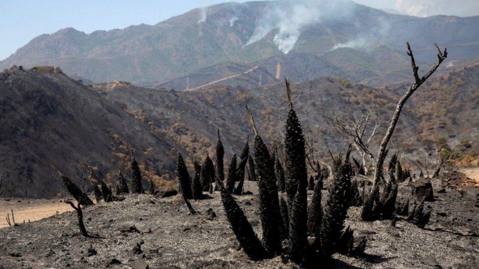 ესპანეთში, ანდალუსიის რეგიონში ტყის ხანძრის გამო 2 000-მდე ადამიანის ევაკუაცია განხორციელდა