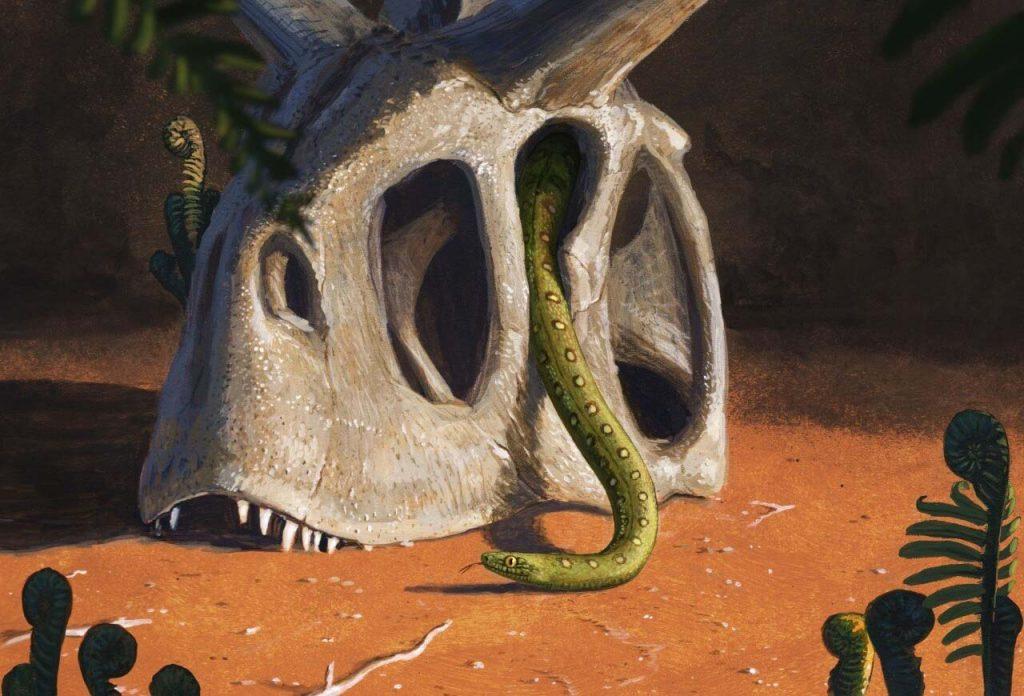 ყველა ამჟამინდელი გველი დინოზავრების მკვლელ ასტეროიდს გადარჩენილი სულ რამდენიმე სახეობისგან მოდის — #1tvმეცნიერება